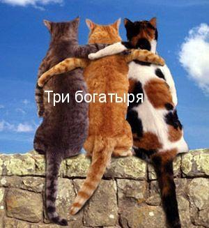 Друзья - это те, кто всегда оказывается рядом, чтобы бросить веревку, когда мы тонем.