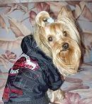 Одежда, аксессуары, ошейники, лежаки, сумки для собак .  Летние скидки!