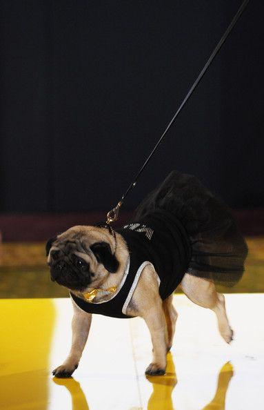 Вечернее платье для собаки