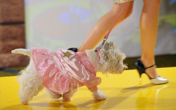 Собака в розовом