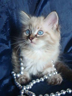 Клички котов - CATS-каталог. Фото ...