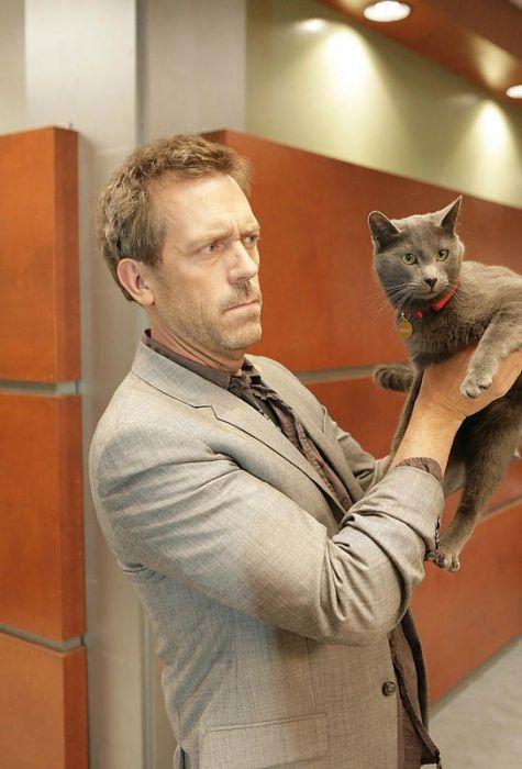 Знаменитости и коты фото
