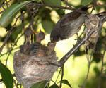 Гнезда птиц.
