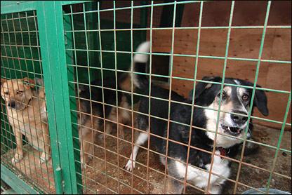По иску прокурора г. Рубцовска городской суд обязал Администрацию отловить всех бездомных животных и поместить их в специализированный приёмник