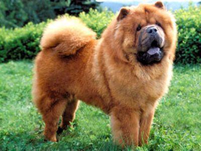 породы собак с фотографиями и описанием.