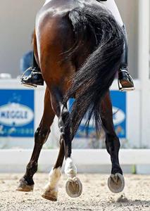 Перевязка скакательного сустава у лошади деформирующий артроз плечевого сустава симптомы