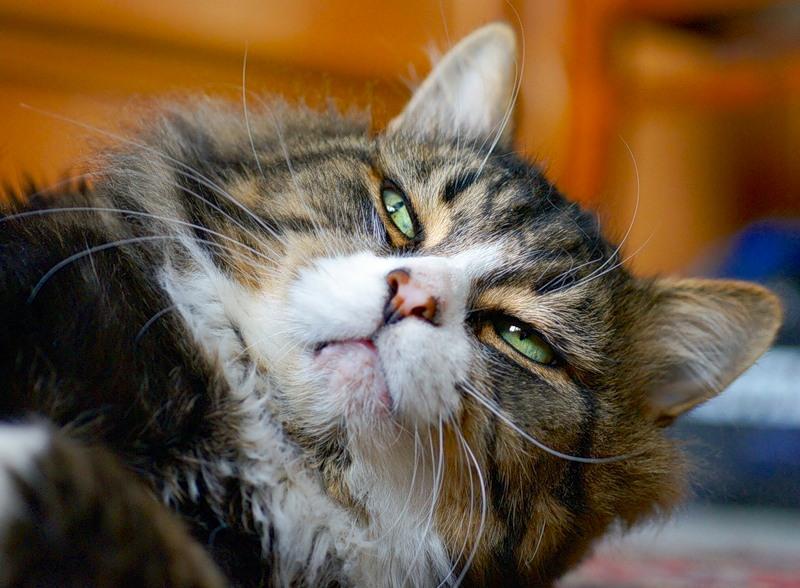 Глаза кошек страдают и