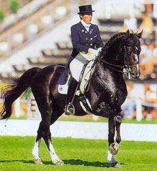 Датская теплокровная порода лошадей Datskayateplokrov3