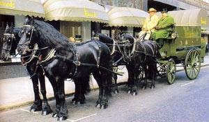 Фризская порода лошадей Frizskaya3