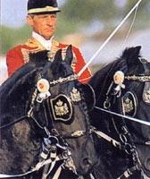 Фризская порода лошадей Frizskaya4