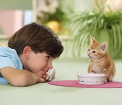 Зоо фото с котятами