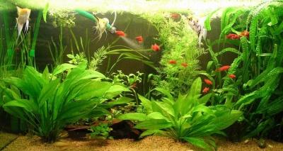 Аквариумные растения общая