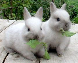 Кормление кроликов: молодняка, беременных самок. Рацион и диеты