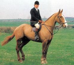 Ирландская упряжная порода лошадей Irlanupr3