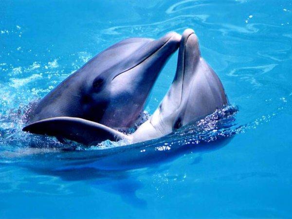 дельфины картинки фото