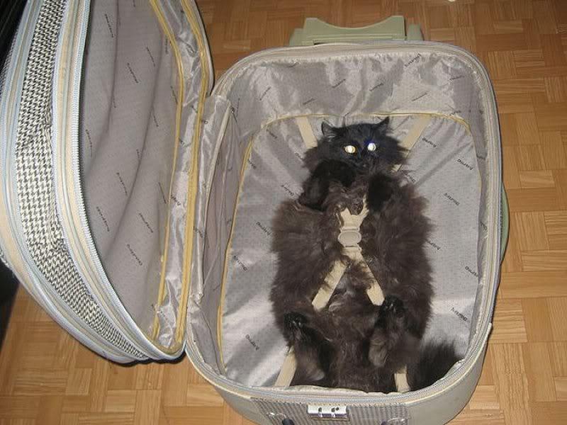Можно перевезти кота в самолете