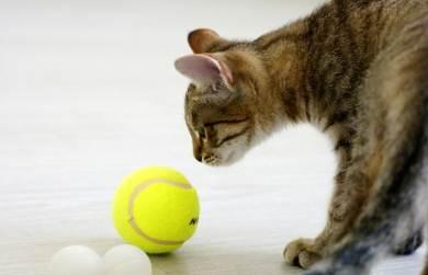 Дрессировщик кошек
