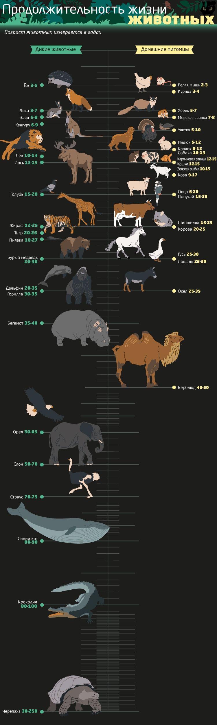 Реферат продолжительность жизни животных и растений 639