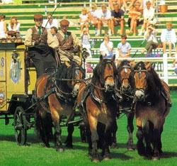 Шведская северная порода лошадей Shvedsever3