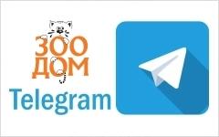 Зоодом в Телеграм