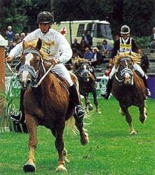 Южно-германская порода лошадей Ujnogerm3