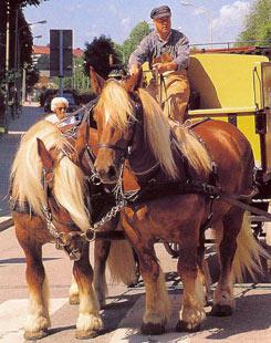 Ютландская порода лошадей Yutland1